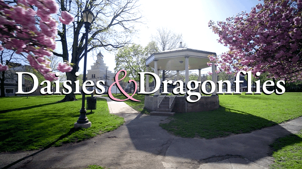 Project image for Daisies & Dragonflies (Canceled)