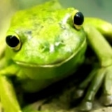 The Grinning Frog