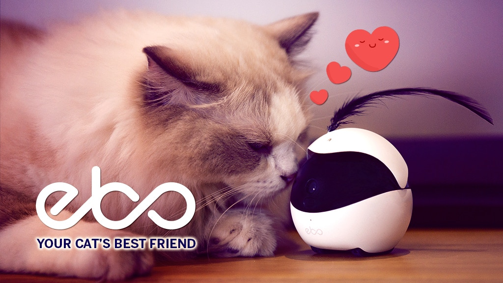 Ebo, The Smart Robot Companion for Your Cat project video thumbnail