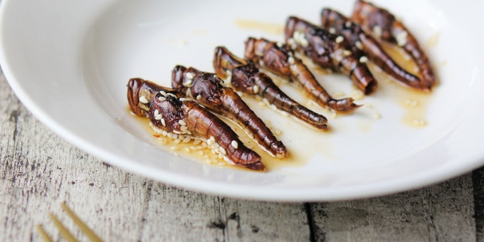 Bugs for Beginners Entomophagy (Edible Insect) Cookbook