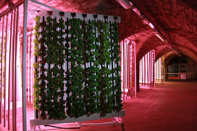 Greens For Good: Vertical Farming with a Social Mission