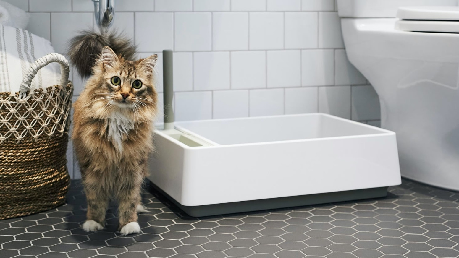 A simple, beautiful litter box with an integrated scoop, dustpan, and handbrush. Built by designers, engineers, and cat behaviorists.