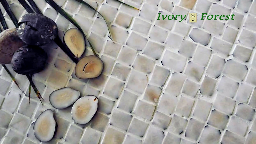 Project image for Ivory Forest - Interior design in vegetable ivory