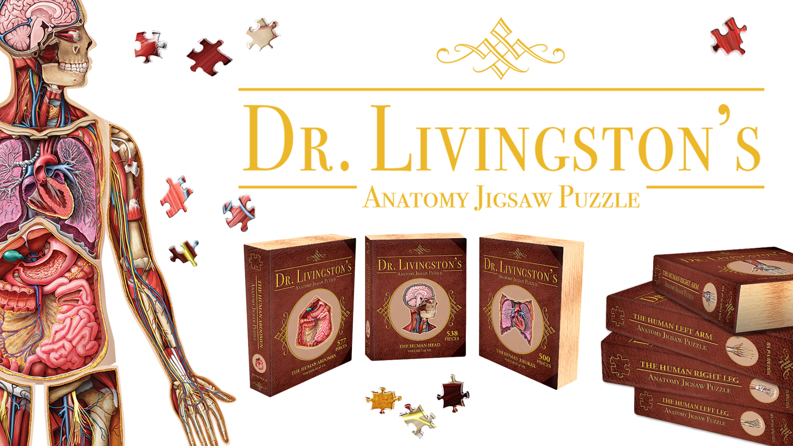 Jigsaw Puzzles Featuring Stunning Art by a Certified Medical Illustrator. Piece Together All Seven Puzzles to Form a 10' Tall Human.