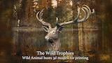 Wild Animal Sculptures thumbnail