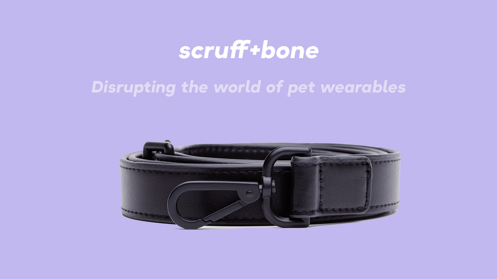 scruff + bone: The Modern Collar for your favourite pooch