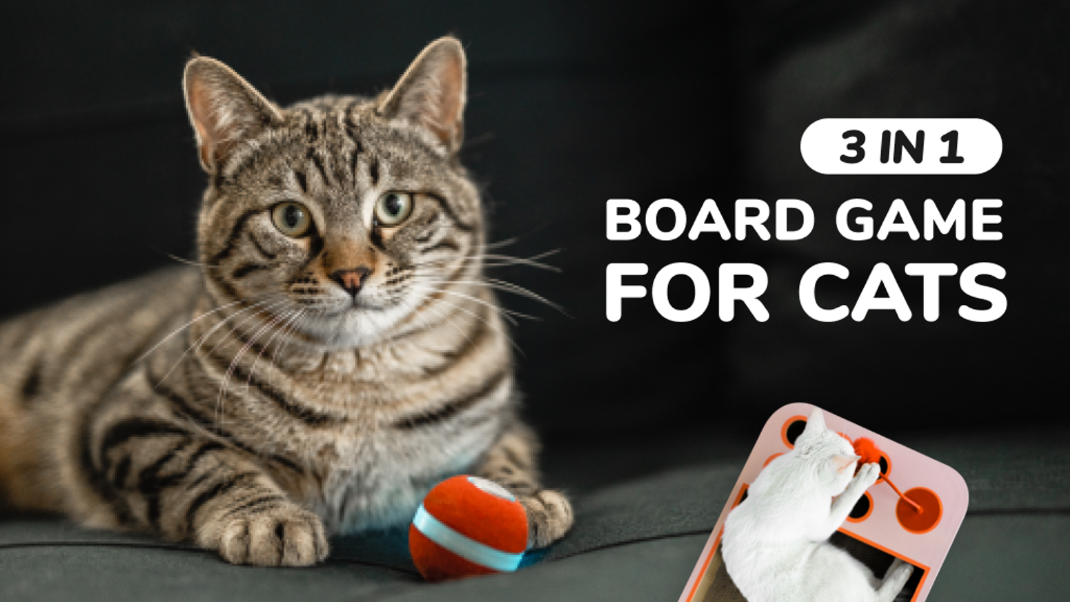 All-in-one interactive toy for cats: Cheerble Ball + Cheerble Scratcher Maze Type or Cheerble Scratcher Billiards Type.