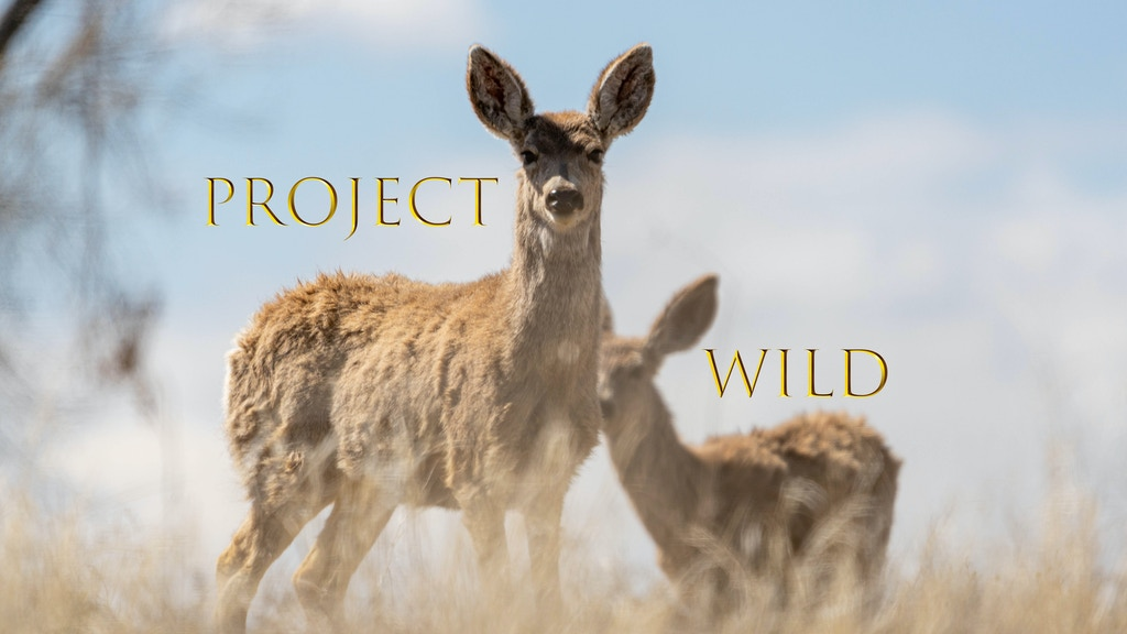 Project image for Project Wild