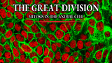 The Great Divide: Learning Mitosis through Tabletop Gaming thumbnail