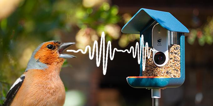 smart birdfeeder