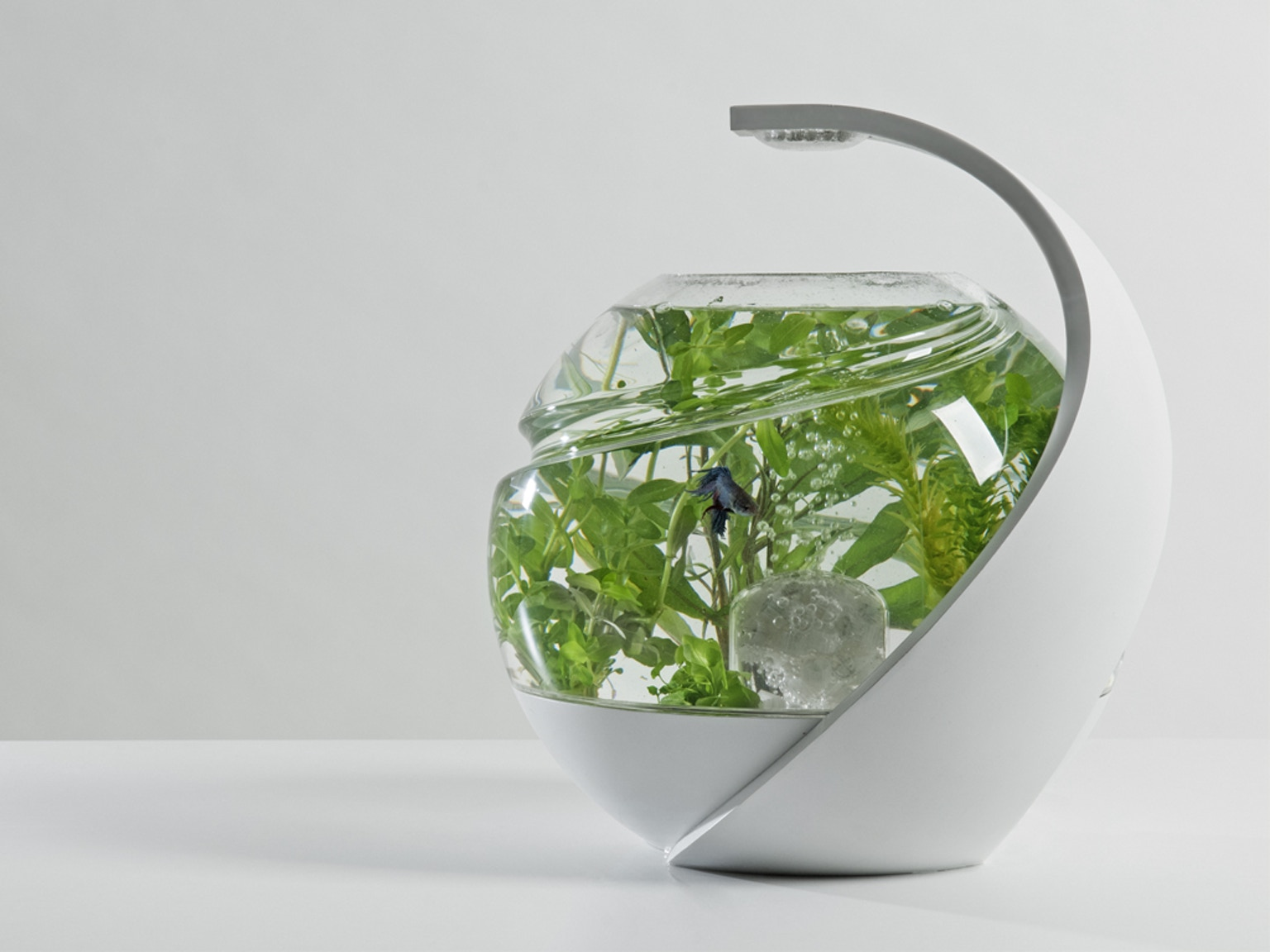 Avo the self cleaning tropical fish tank by susan shelley for Clean fish tank