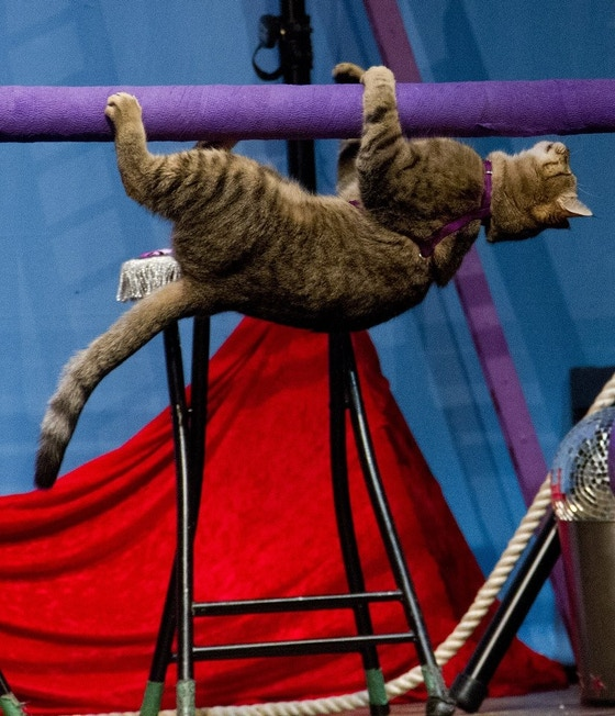 Amazing Acro-Cats and Rock-Cats Purr-fect Tour Bus by The Amazing