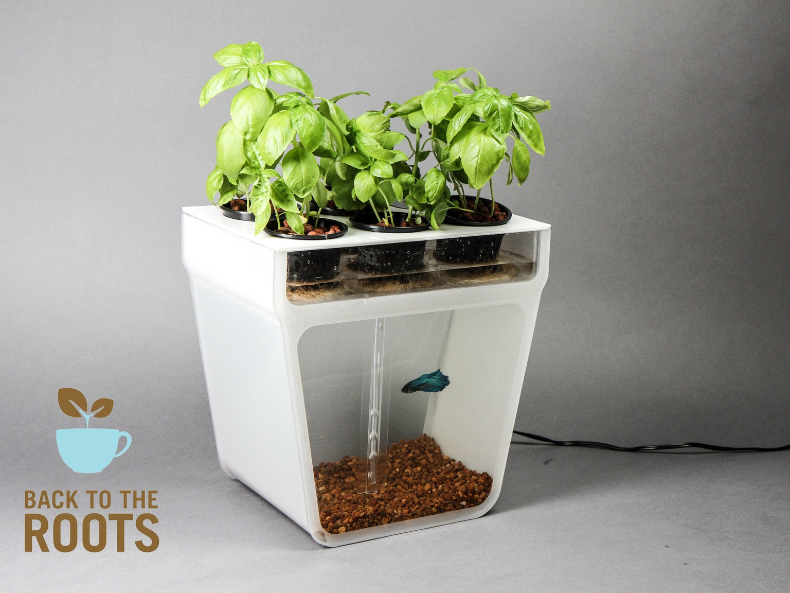 Home aquaponics kit self cleaning fish tank that grows for Loves fish box menu