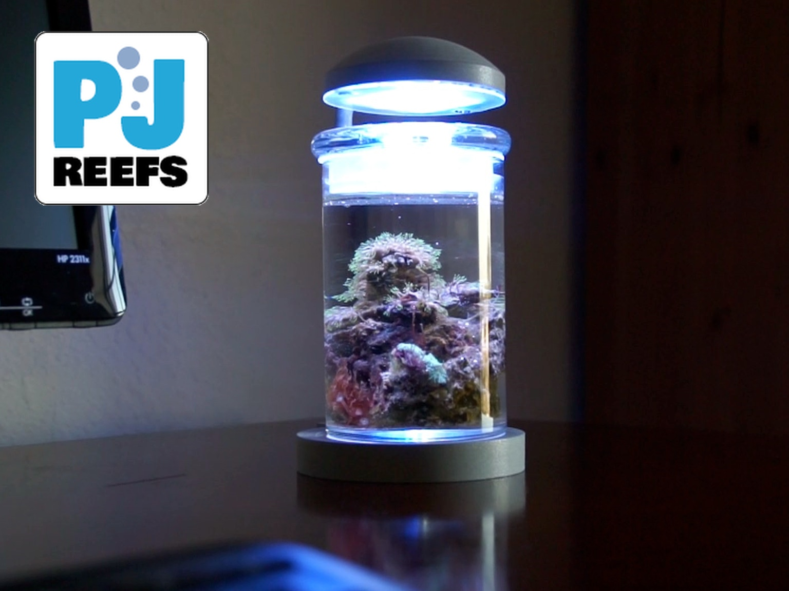 Pj reefs miniature saltwater aquarium by pj reefs for Low maintenance fish tank